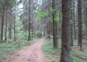 uciastok zemli raspolozenyj v lesnom masife