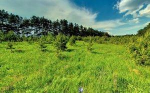 žemėsūkiopaskirtiesžemėspardavimas,kupitj ucastok zemli v trakai rajonevozleozera