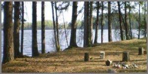 Участки земли лесноймассив>продаем>сдаем в аренду