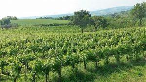 turtas italijoje zeme plantacija paruostas verslas